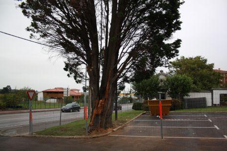 árbol del cementerio carriona.