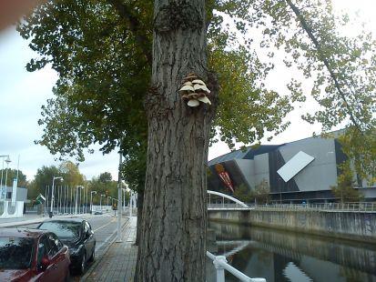 Setas en el tronco del árbol