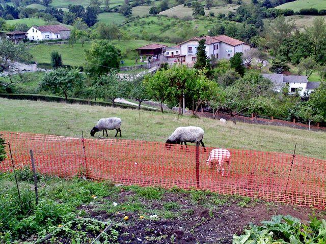 raza asturiana